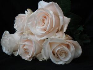 white-roses-1377004-640x480